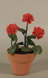 Red Geraniums in Clay Pot